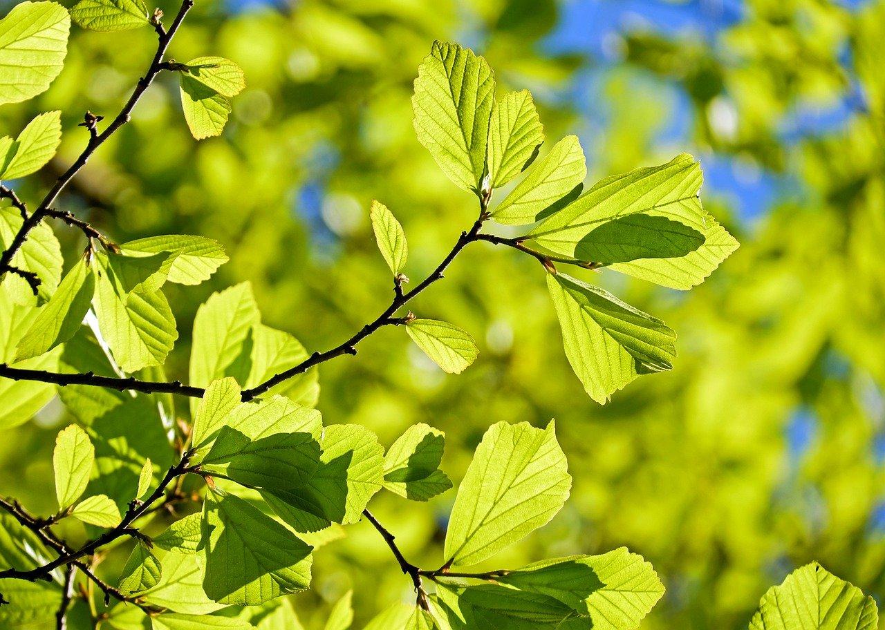 Baumspende dank Mehrwertsteuer