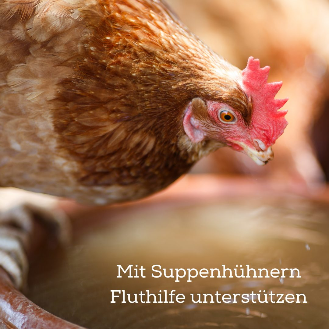 Suppenhühner bestellen und Fluthilfe in Heimerzheim unterstützen!